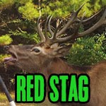 About the Exotics: Red Stag