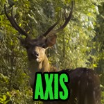 About the Exotics: Axis