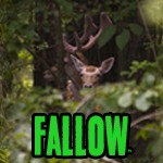 About the Exotics: Fallow